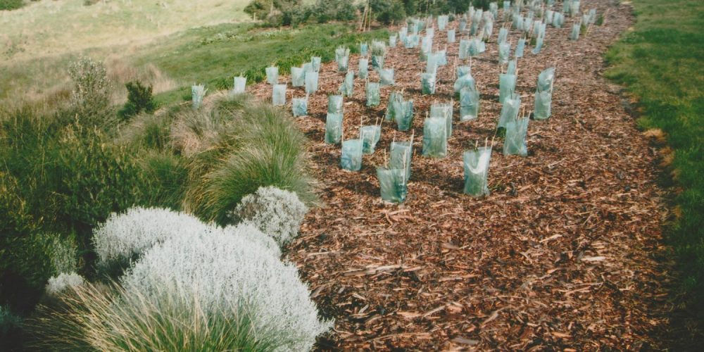 Revegetation projects